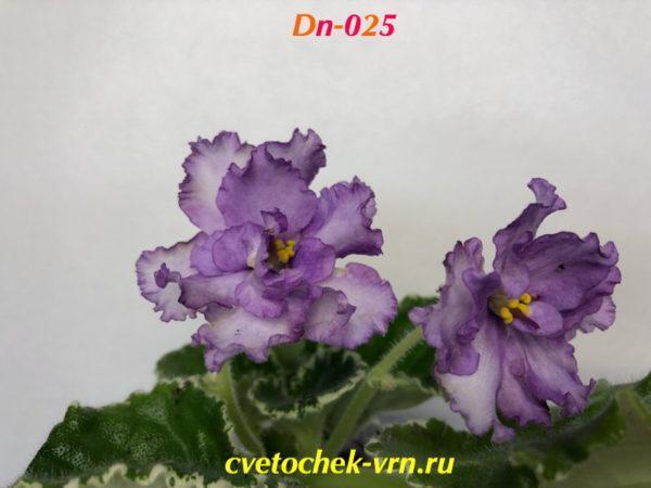 Dn-025 (Д.Денисенко)