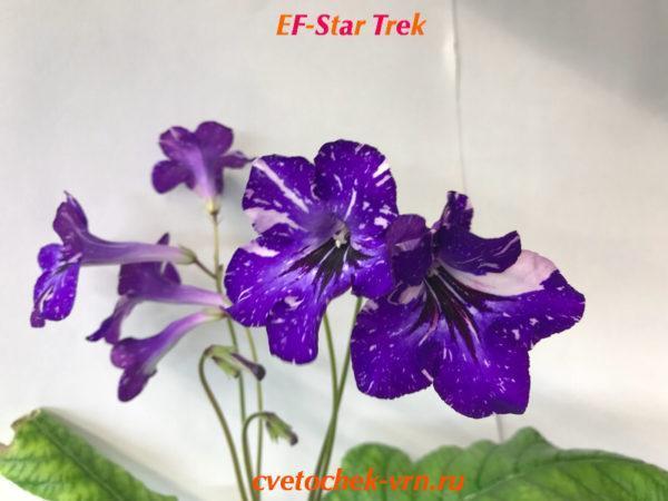 EF-Star Trek (Грицуля)