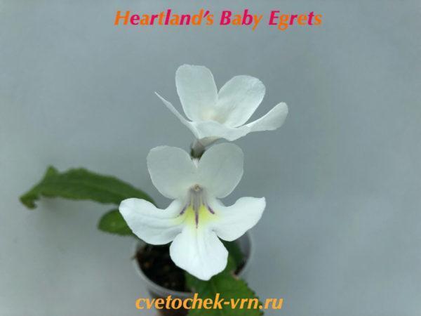 Heartland's Baby Egrets (D.Marten's)