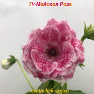 TV-Ночной Вернисаж (Т.Высота)