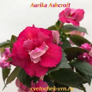 Aurika Ashcroft (S.Saliba)