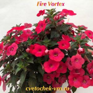 Fire Vortex (S.Saliba)
